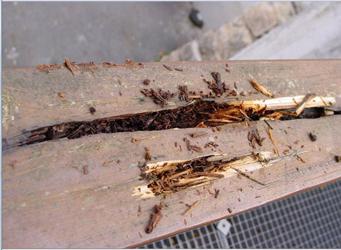 Traitements des bois - Peyrache Traitement à Saint-Etienne
